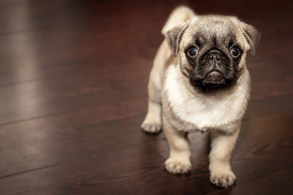 Karma morka dla psa - jaką wybrać?