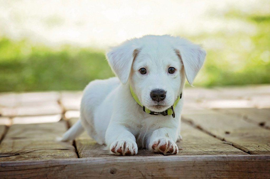 Jakie składniki są ważne w karmie dla psa?